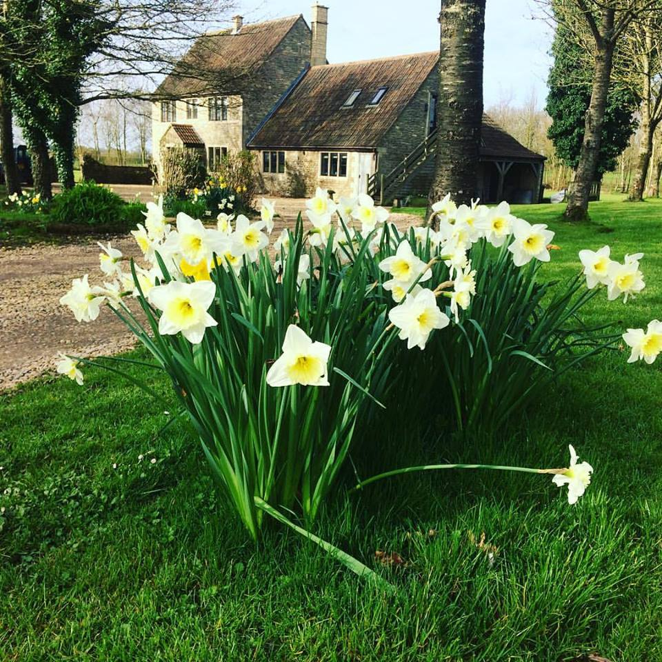 Springtime at Great Ashley Farm